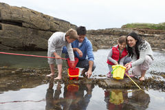 Família nova na praia que coleta escudos imagens de stock royalty free