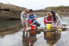 Família nova na praia que coleta escudos imagens de stock