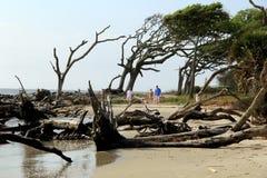 Família nova que anda ao longo da praia da madeira lançada à costa, ilha de Jekyll, 2015 fotografia de stock