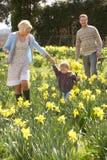 Família nova que anda entre Daffodils da mola Fotos de Stock Royalty Free