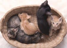 Família pequena do gatinho na cesta Foto de Stock