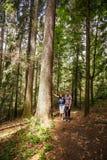 Família que caminha através de uma floresta velha fotos de stock