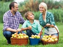 Família que colhe maçãs no jardim fotos de stock royalty free