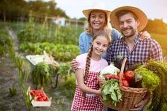 Família satisfeita dos fazendeiros com vegetais orgânicos foto de stock