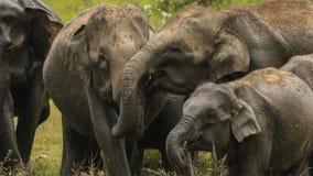 Família selvagem feliz do elefante no amor fotos de stock