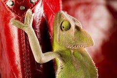 Famílias do lagarto foto de stock royalty free