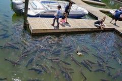 Famílias que alimentam carpas em Smith Mountain Lake, Virgínia imagem de stock royalty free