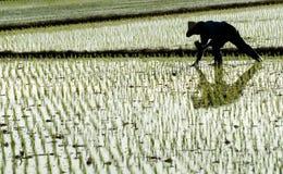 famer农厂工作 免版税库存照片
