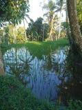 Famer życie w Ubud Bali Indonezja zdjęcia stock