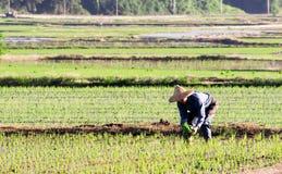 Famer die in het landbouwbedrijf werkt stock fotografie