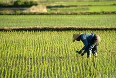 Famer que trabalha na exploração agrícola Fotos de Stock