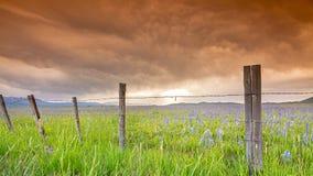 Famers花的篱芭和领域在橙色天空下 图库摄影
