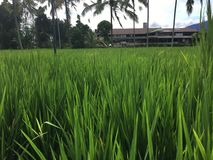 Famers Leben in Ubud Bali Indonesien Stockfotos