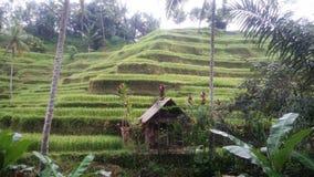 Famers liv i Ubud Bali Indonesien arkivbilder