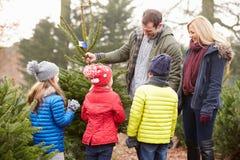 Famiglia all'aperto che sceglie insieme l'albero di Natale Fotografie Stock Libere da Diritti