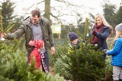 Famiglia all'aperto che sceglie insieme l'albero di Natale Fotografia Stock Libera da Diritti