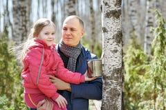 Famiglia alla linfa di raccolta di legno della betulla in tazza Immagine Stock