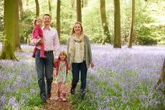 Famiglia che cammina insieme attraverso il legno di Bluebell Immagini Stock Libere da Diritti