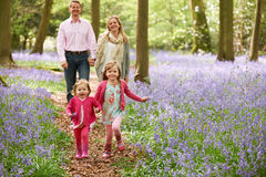 Famiglia che cammina insieme attraverso il legno di Bluebell Fotografia Stock