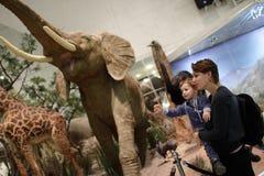Famiglia che esamina elefante Immagini Stock Libere da Diritti