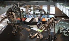 Famiglia che gode del museo della mostra del dinosauro Fotografia Stock
