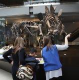 Famiglia che gode del museo della mostra del dinosauro Immagini Stock