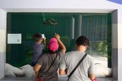 Famiglia che guarda ai pinguini in zoo Immagini Stock Libere da Diritti