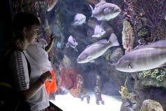 Famiglia che guarda i pesci della cernia oscura immagine stock