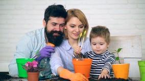 Famiglia che pianta i fiori di estate Piantatura dei fiori in vasi Concetto di giardinaggio archivi video