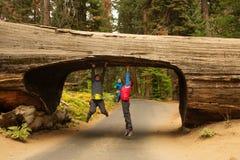 Famiglia con il parco nazionale infantile della sequoia di visita in California immagine stock