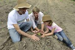 Famiglia degli agricoltori organici che piantano piantina Fotografia Stock