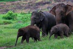 Famiglia degli elefanti Fotografie Stock