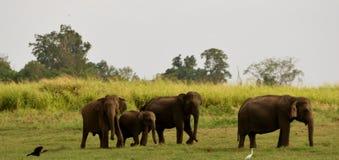 Famiglia degli elefanti Fotografie Stock Libere da Diritti