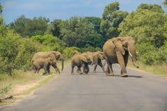 Famiglia degli elefanti che attraversano la strada pavimentata Fotografia Stock Libera da Diritti