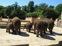 Famiglia degli elefanti Natura selvaggia Fotografie Stock Libere da Diritti