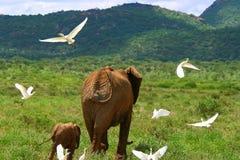 Famiglia degli elefanti nel selvaggio Fotografia Stock