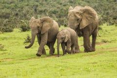 Famiglia degli elefanti su un percorso Immagini Stock