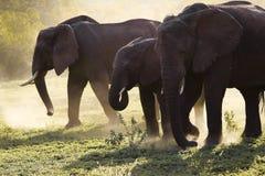 Famiglia degli elefanti sulla strada di Serengeti del thre Fotografia Stock Libera da Diritti