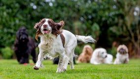 Famiglia dei cani Fotografie Stock Libere da Diritti