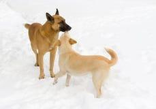 Famiglia dei cani esterni Fotografia Stock Libera da Diritti