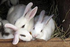 Famiglia dei conigli Fotografia Stock