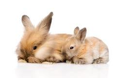 Famiglia dei conigli Isolato su priorità bassa bianca Immagini Stock