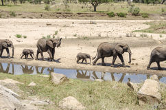 Famiglia dei elefants Fotografia Stock
