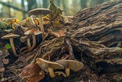 Famiglia dei funghi Immagini Stock