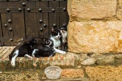 Famiglia dei gatti - Ronda fotografie stock libere da diritti