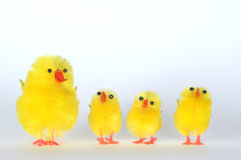 Famiglia dei pulcini Fotografie Stock
