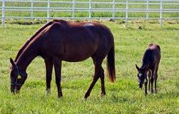 Famiglia del cavallo Fotografia Stock Libera da Diritti
