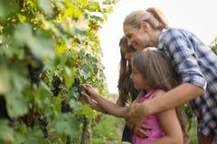Famiglia del coltivatore del vino in vigna prima della raccolta Immagine Stock Libera da Diritti