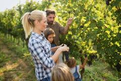 Famiglia del coltivatore del vino in vigna prima della raccolta Fotografia Stock Libera da Diritti