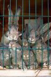 Famiglia del coniglio Fotografia Stock Libera da Diritti